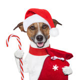 Christmas  dog Royalty Free Stock Image