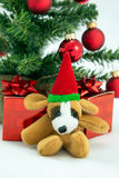 Christmas Dog. Cuddly christmas Dog with christmas tree and presents Royalty Free Stock Photography