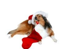Christmas dog 3. Christmas dog close-up on white background Stock Image