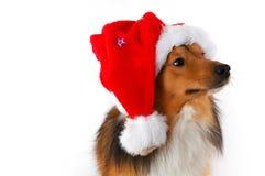 Christmas dog. Close-up on white background Royalty Free Stock Image