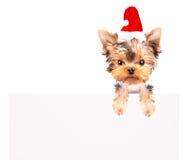 Christmas dog as santa with bunner Stock Photography