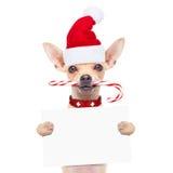 Christmas dog as  santa claus Stock Image