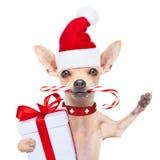 Christmas dog as  santa claus Stock Photos