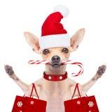 Christmas dog as  santa claus Royalty Free Stock Photo