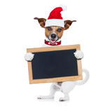 Christmas dog as  santa claus Stock Images