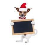 Christmas dog as  santa claus Stock Images