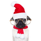 Christmas dog as  santa claus Royalty Free Stock Images