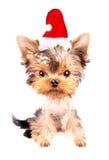 Christmas dog as santa Royalty Free Stock Photos