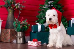 Christmas Dog as symbol of new year Stock Photos