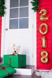 Christmas Dog as symbol of new year Stock Photos