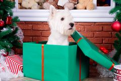 Christmas Dog as symbol of new year Stock Photo
