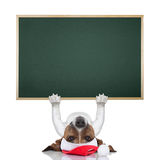 Christmas dog banner, Stock Images