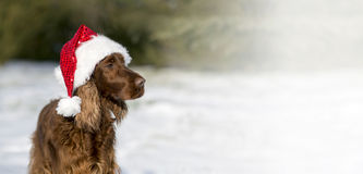 Christmas dog banner Stock Photos