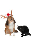 Christmas dog with black cat. Christmas dog deer, with black cat close-up Royalty Free Stock Photography