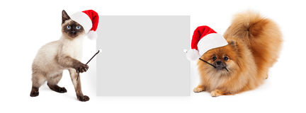 Christmas Dog and Cat Holding Up Banner. Siamese kitten and Pomeranian dog holding up a blank white sign while wearing red Christmas Santa Claus hats Stock Photo