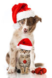 Christmas dog and cat. Puppy and kitten with santa hats Stock Image