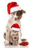 Christmas dog and cat Stock Image