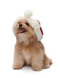 Christmas with Dog Stock Photos