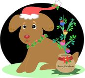 Christmas Dog with Christmas Plant Stock Photography