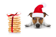 Christmas dog and cookies Stock Images