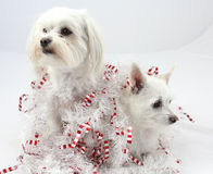 Christmas Dog Decorations Stock Photography