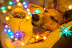 Christmas dog with fairy lights Stock Image
