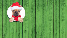 Christmas dog Stock Photo