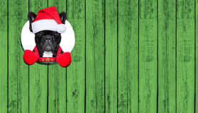 Christmas dog Royalty Free Stock Images