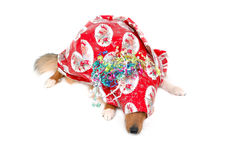 Christmas dog gift 2. Christmas dog gift close-up Royalty Free Stock Photography