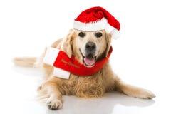 Christmas dog. Isolated on white Royalty Free Stock Photos