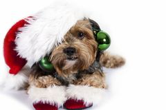 Christmas dog with ornaments royalty free stock image