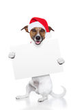 Christmas dog placeholder. As santa Royalty Free Stock Photo