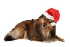 Christmas dog portrait Stock Photo