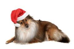 Christmas dog portrait Stock Image