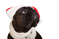 Christmas dog with presents Stock Photography