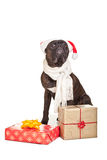 Christmas dog with presents Stock Images
