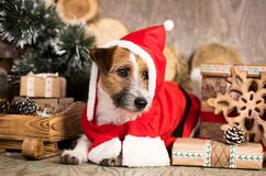 Christmas dog in red gnome costume stock images