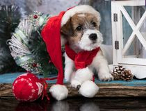 Christmas dog in red gnome costume stock photos
