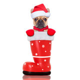 Christmas dog in a red santa  boot Stock Images