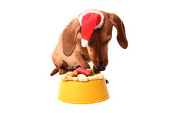 Christmas dog's supper Stock Images