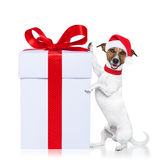Christmas dog santa Stock Images