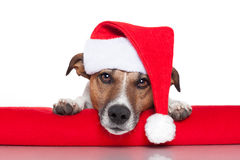 Christmas dog santa baby. Red hat Stock Images
