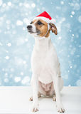 Christmas dog in santa hat. Ob blue snowfall background Royalty Free Stock Photos