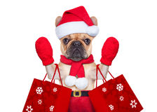 Christmas dog shopping. Santa claus christmas dog isolated on white background, waving hands, and shopping on sale stock photo