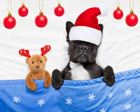 Christmas dog with teddy bear sleeping Royalty Free Stock Image