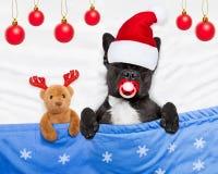 Christmas dog with teddy bear sleeping Stock Images