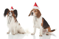 Christmas dogs Royalty Free Stock Photos