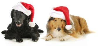 Christmas dogs stock photography