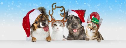 Christmas Dogs and Cats Over White Web Header stock image