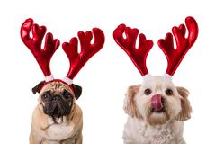 Christmas dogs with deer antlers. Christmas dogs with antlers on white isolated background Stock Images